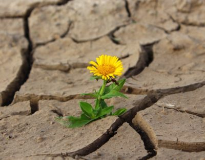 plant-leaf-desert-flower-dry-dirt-865929-pxhere.com